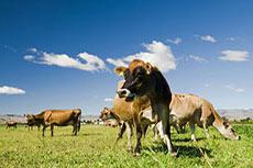 ACI: EPA refrain from animal fats in RFS