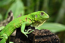 Iguanas and the oilsands: how biology can inform energy
