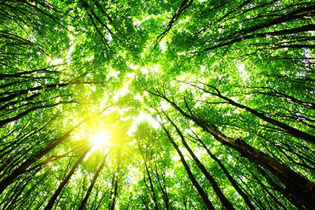 Renewable methanol offers benefits | Hydrocarbon Engineering